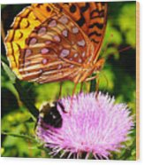 Meadow Fritillary On Thistle Blossom Wood Print