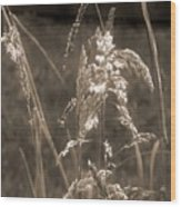 Meadow Grass In Sepia Wood Print