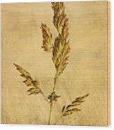 Meadow Grass Wood Print