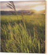 Meadow Light Wood Print