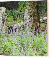 Meadow Lupine Wood Print