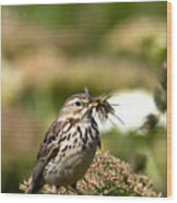 Meadow Pipit With Food Wood Print