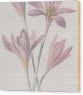 Meadow Saffron Wood Print