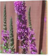 Meadow Sage Close Up Wood Print