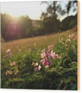 Meadow Sunset Wood Print