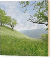 Meadow View Spring Wood Print