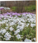 Meadow With Flowers At Botanic Garden In The Blue Mountains Wood Print