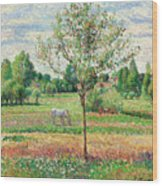 Meadow With Grey Horse, Eragny Wood Print