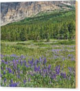 Meadow With Lupines Wood Print by Merilee Phillips