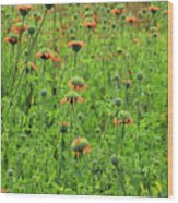 Meadow With Orange Wildflowers Wood Print