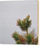 Meadowlark - 1 Wood Print