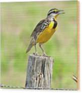 Meadowlark 7 Wood Print