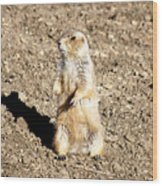 Mean Old Prairie Dog Wood Print
