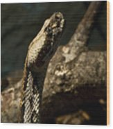Mean Poisonous Snake Wood Print