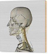 Medical Illustration Showing Thyroid Wood Print