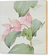 Medinilla Magnifica Wood Print by Sarah Creswell