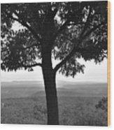 Meditation Tree  Wood Print