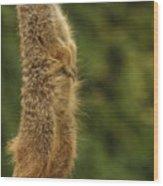 Meercat Wood Print