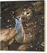 Meerkat     Say What Wood Print