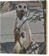 Meerkat 2 Wood Print