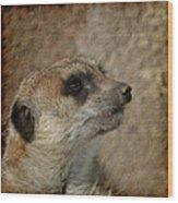 Meerkat 3 Wood Print by Ernie Echols
