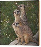 Meerkat Hill Wood Print
