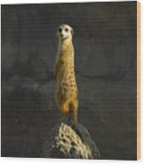 Meerkat On The Watch Wood Print
