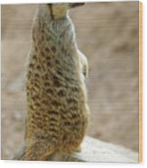 Meerkat Portrait Wood Print