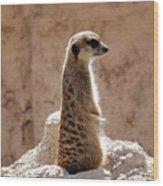 Meerkat Standing On Rock And Watching Wood Print