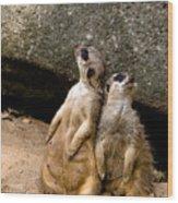 Meerkats Keeping An Eye Out Part 2 Wood Print