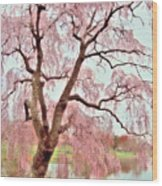 Meet Me Under The Pink Blooms Beside The Pond - Holmdel Park Wood Print