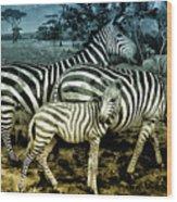 Meet The Zebras Wood Print