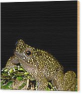 Mehu�n Green Frog Wood Print