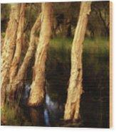Melaleuca Magic Wood Print by Louise Cooke