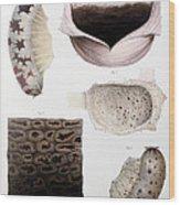 Melanoma, Blood And Stomach Wood Print