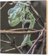 Mellers Chameleon Portrait 3 Wood Print