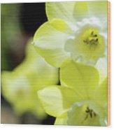 Mello Yellow Wood Print