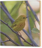 Mellow Yellow - American Warbler - Setophaga Petechia Wood Print