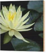 Mellow Yellow Water Lily Wood Print
