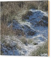 Melting Snow On Plants Wood Print