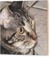 Melvin The Wondercat Wood Print