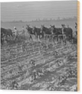 Men And Mules Cultivating Cotton Wood Print