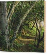 Mendoza Trail Wood Print