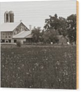Mennonite Farm - Brown And White Field Wood Print