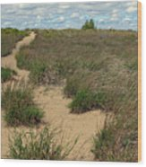 Mentor Headlands Beach Trail Wood Print