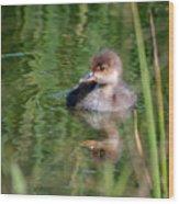 Merganser Duckling Wood Print