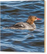 Merganser Wood Print