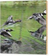 Merganser Reflections Wood Print