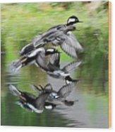 Mergansers In Flight Wood Print