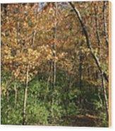 Merwin Autumn Trail Bend Wood Print